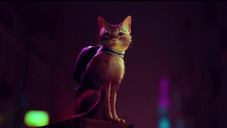 Um gato com uma mochila a olhar fixamente ao longe